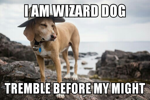 Wizard Dog