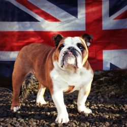 Fate: The British Life of Pets